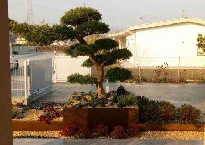 bonsai-davanti-entrata
